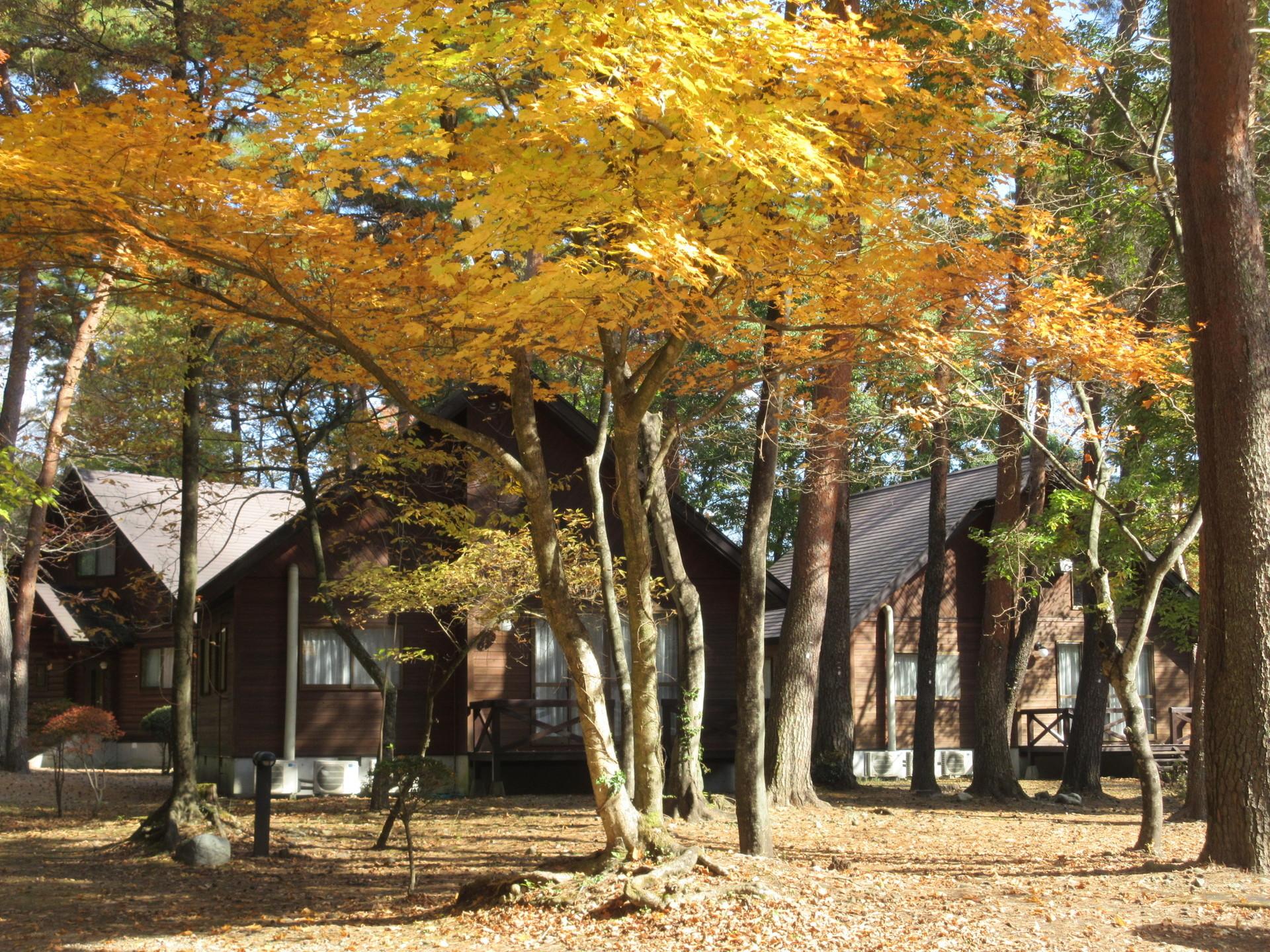 秋の景色④.JPG